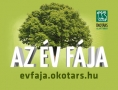 Az Év Fája 2012